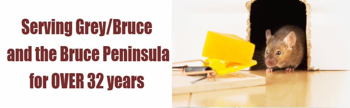 Serving the Wiarton Area for Over 25 Years | Mouse Trap