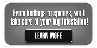 From bedbugs to spiders, we'll take care of your bug infestation! | Learn More